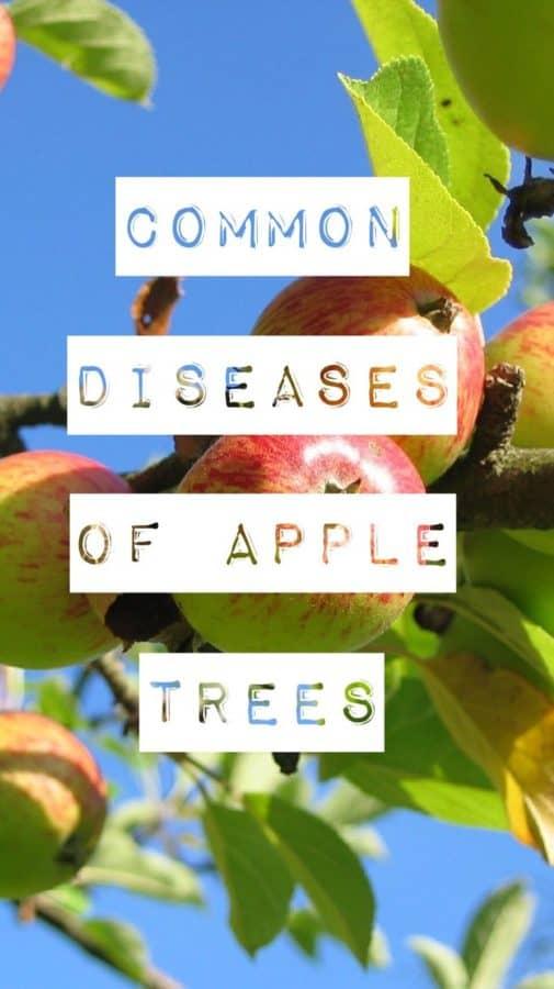 Fungus White Apple Trees