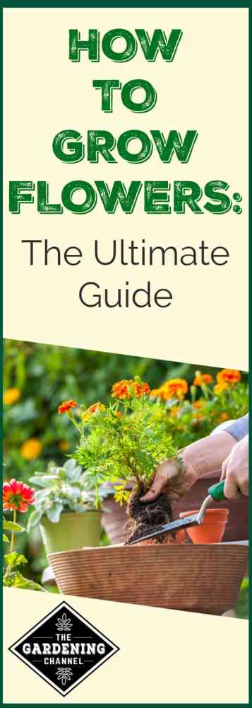hands working planting flowers in flower garden with text overlay hot to grow flowers the ultimate guide