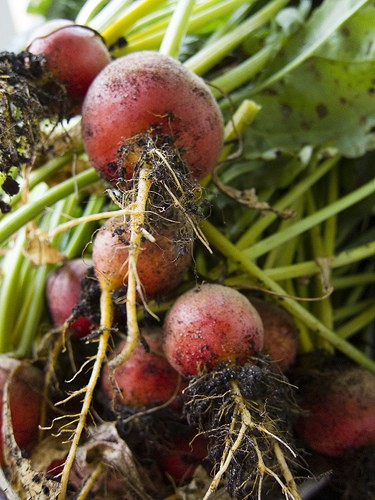 Health Benefits of Beets