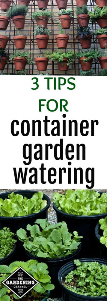 terracotta pot container vertical garden and gallon pot vegetable container garden with text overlay 3 tips for container garden watering