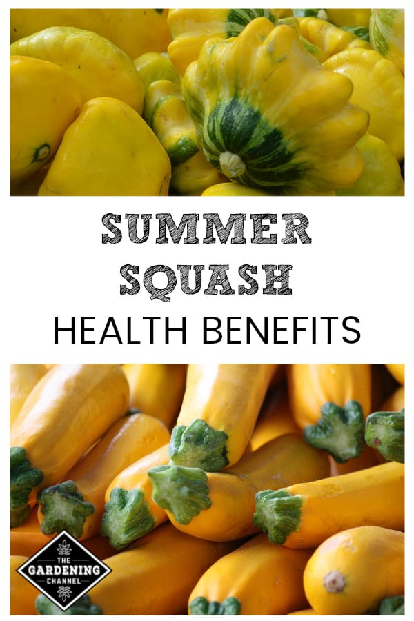yellow pattypan squash and straight neck squash with text overlay summer squash health benefits