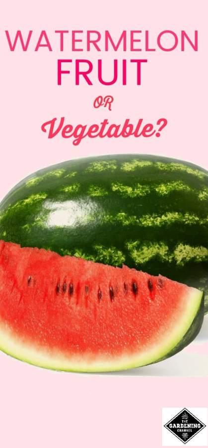 Watermelon Fruit or Vegetable