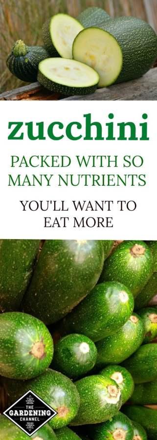 health benefits of zucchini
