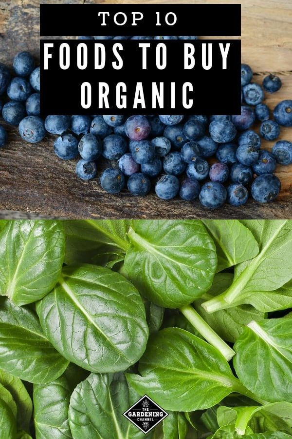 blueberries and spinach with text overlay top ten foods to buy organic