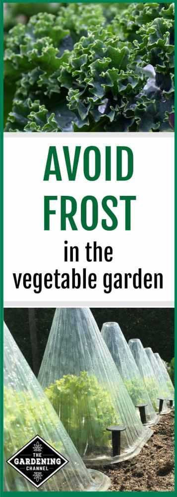 frost on kale in the garden and cloche over endive in garden with text overlay avoid frost in the vegetable garden