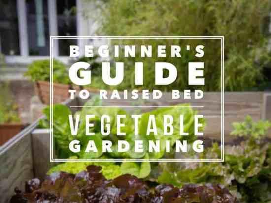 ultimate beginner raised bed vegetable gardening guide