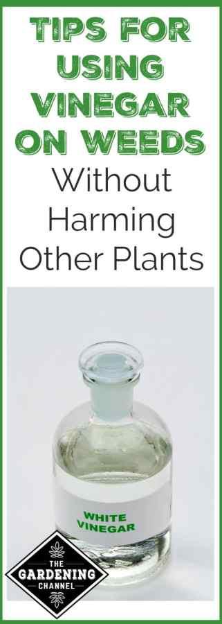 Use vinegar on weeds