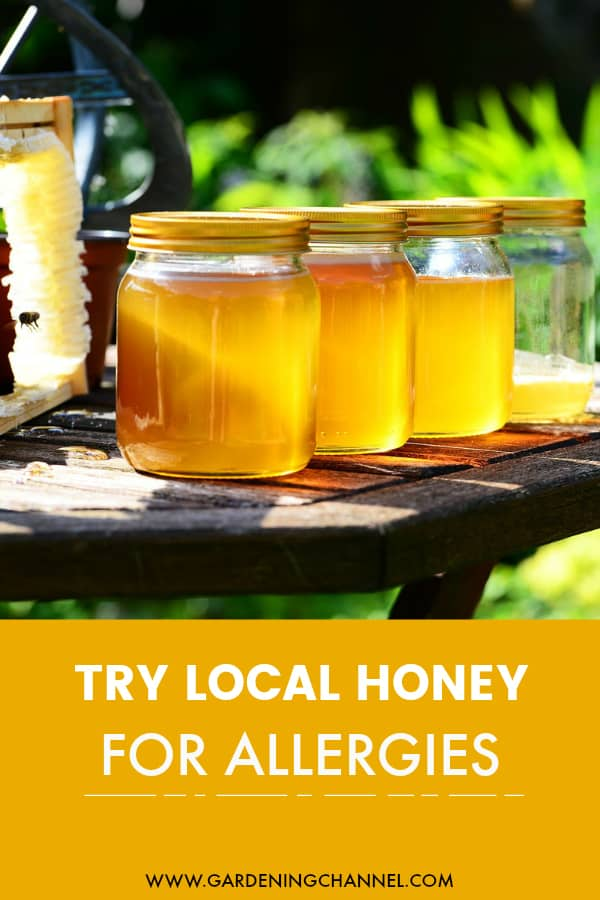local honey harvested with text overlay try local honey for allergies