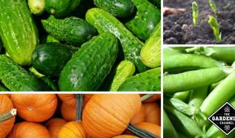 Vegetables That Grow Well From Seed