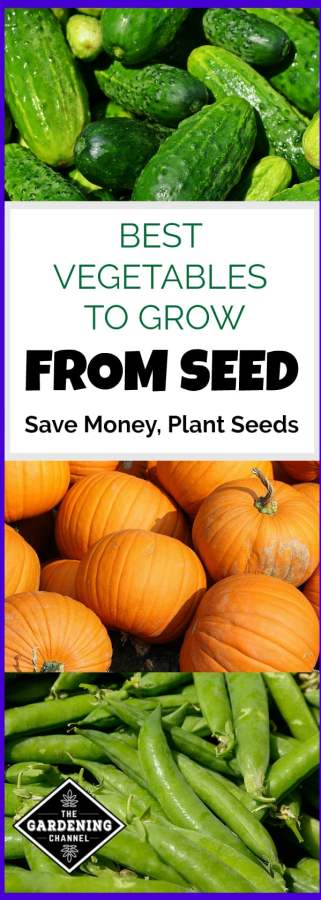 save money and plant garden from seeds