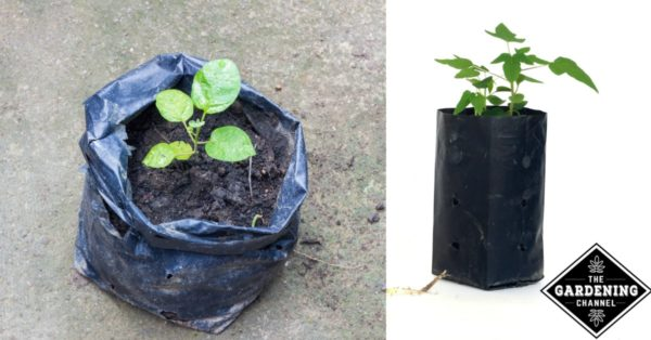 garden in a bag. Plant In A Bag Of Soil Garden