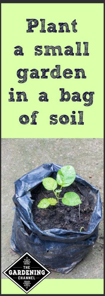 Plant a small garden in a bag of soil.