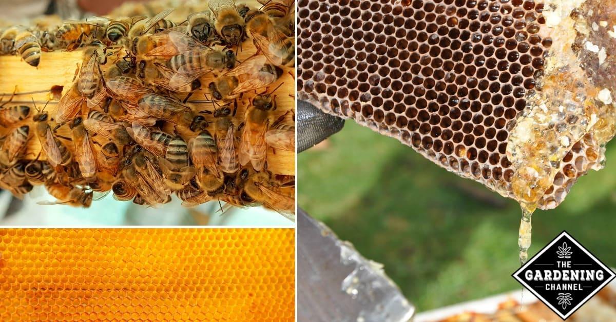 Raising Honeybees for Beginners - Gardening Channel