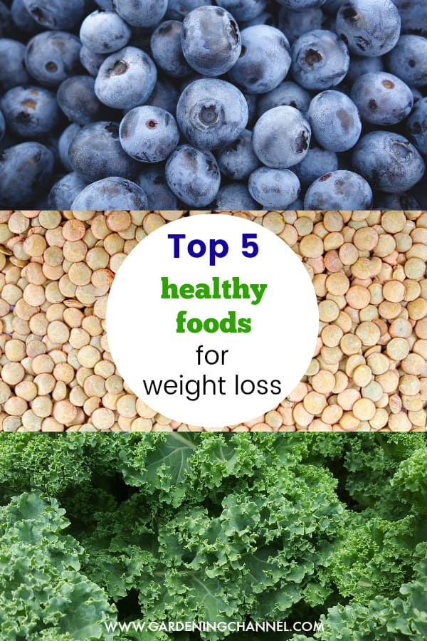 blueberries lentils kale with text overlay top five healthy foods for weight loss