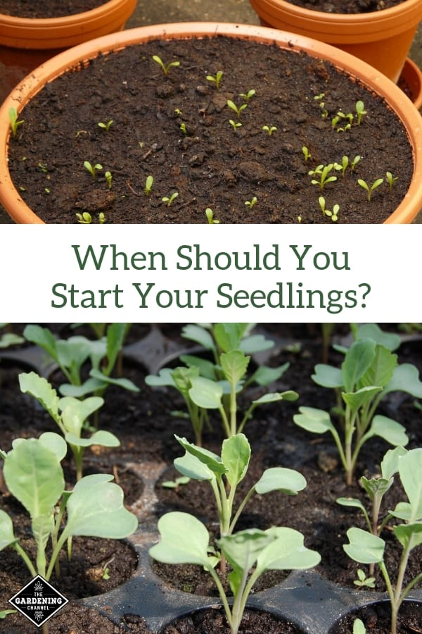 seeds starting in pot and seed starting tray with text overlay when should you start your seedlings