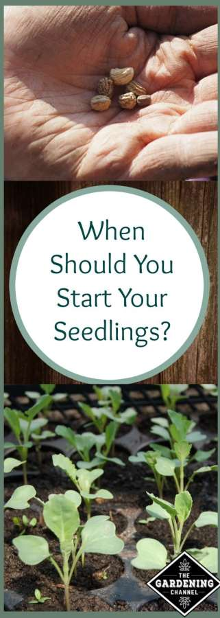 When to start seedlings
