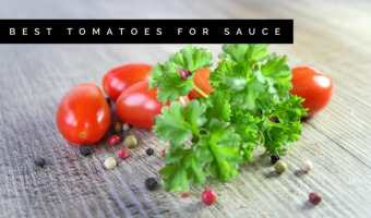 Sauce Tomatoes: Best Varieties