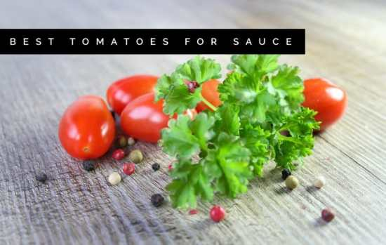 Best Tomato Varieties for Sauce