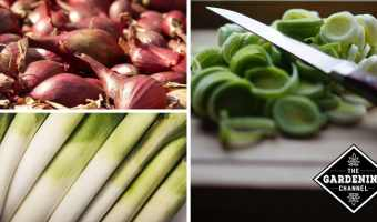 Growing Onion Alternatives in the Garden