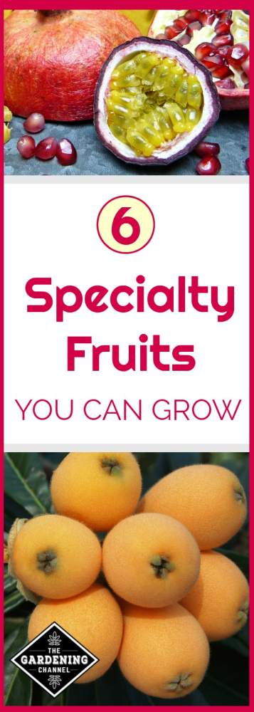 specialty fruits you can grow