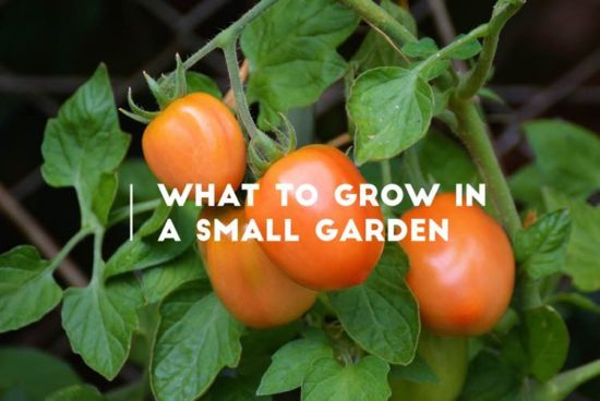what to grow in a small garden
