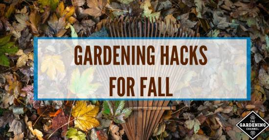 Follow these tips in your garden this fall