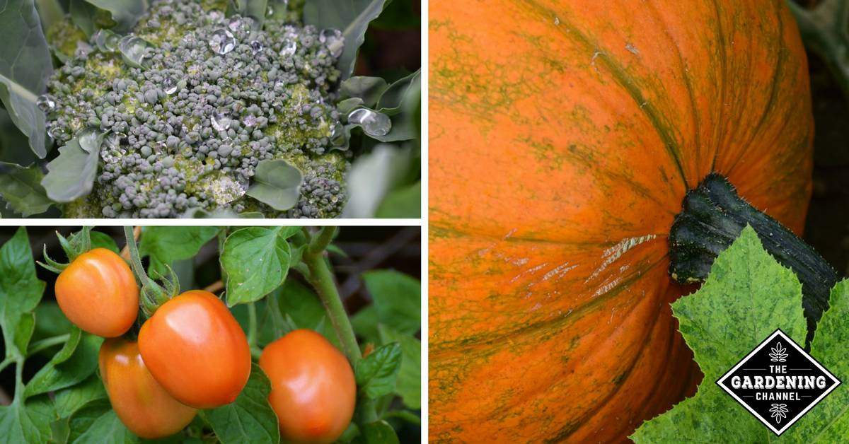 The Exact Vegetables To Plant Every Season According to Your Gardening Zone