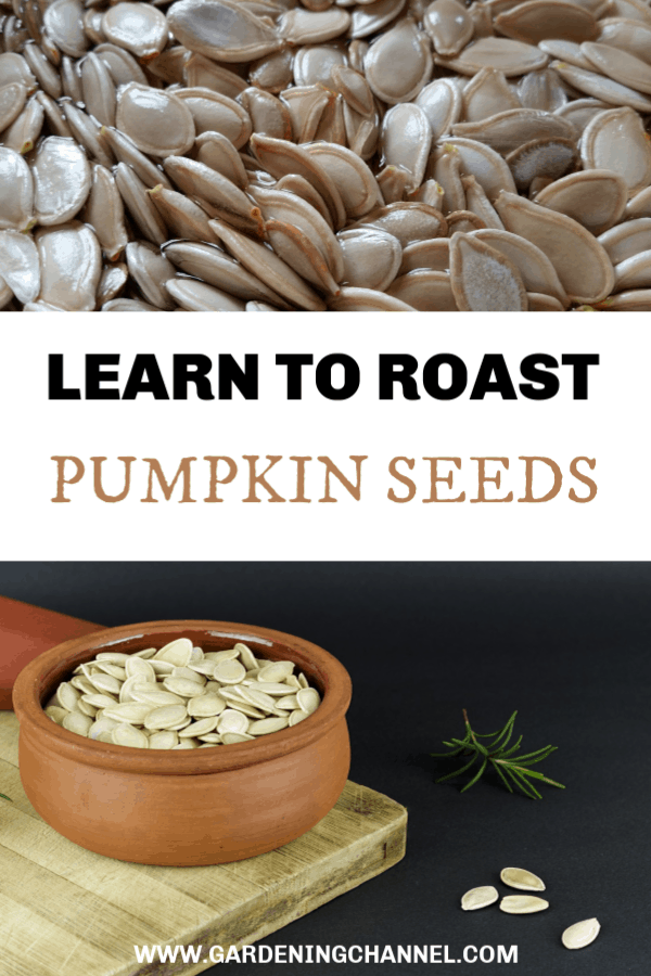 pumpkin seeds soaking and pumpkin seeds in bowl with text overlay learn to roast pumpkin seeds