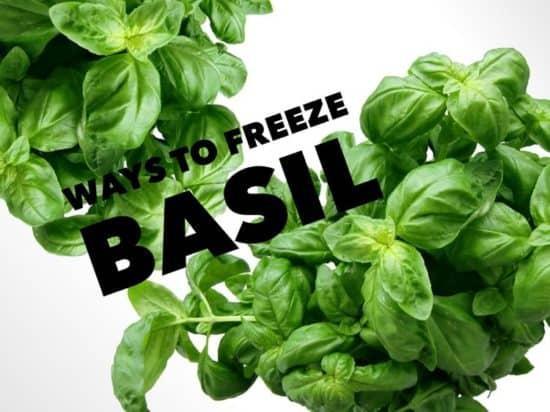 how to freeze basil