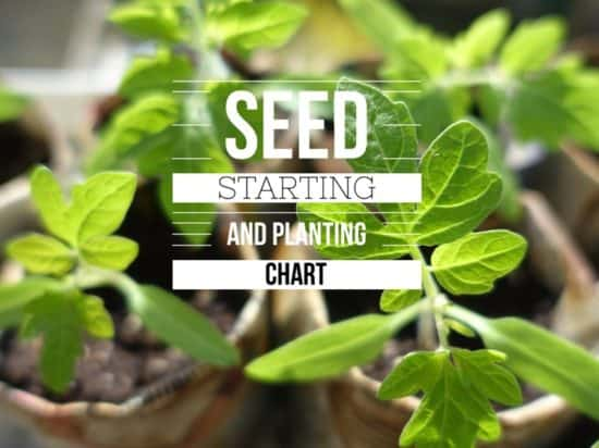 Starting seeds and planting dates