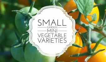 Mini Varieties for Small Gardens