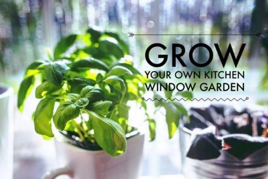 grow a kitchen window garden
