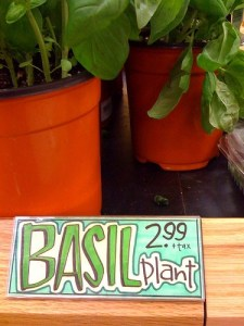 buy garden plants at the grocery store