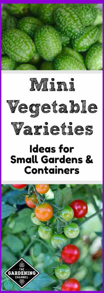 mini varieties for a small garden space
