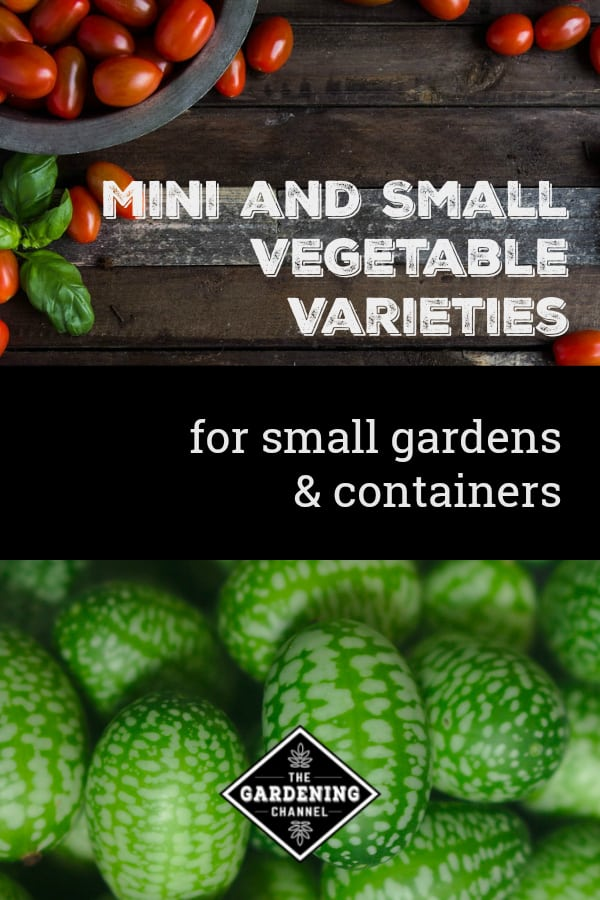 cherry tomatoes and cucumelons with text overlay mini and small vegetable varities for small gardens and containers