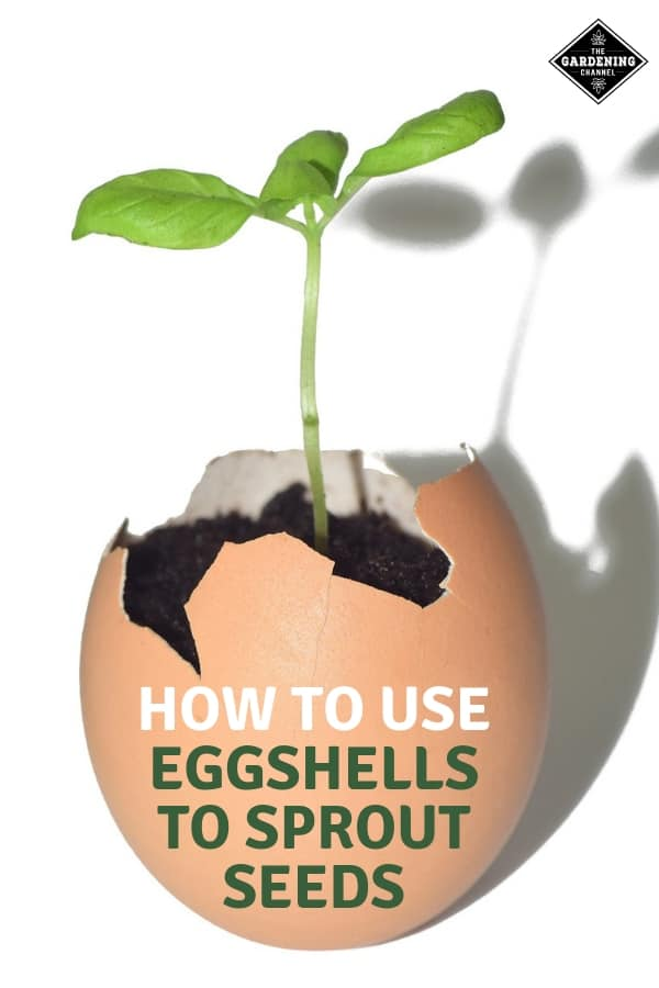 Using Eggshells to Sprout Seeds - Gardening Channel