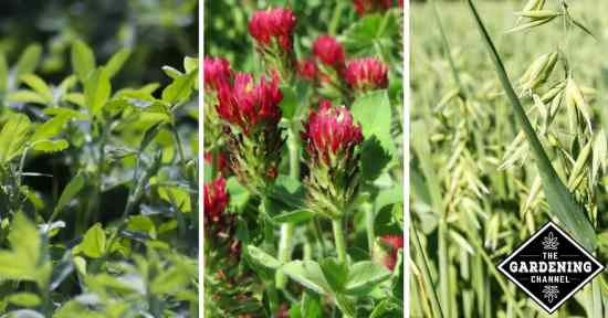 Growing Cover Crops for the Home Garden