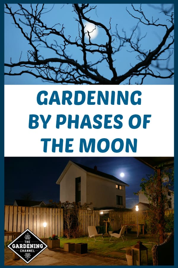 full moon rising over tree and full moon over garden with text overlay gardening by phases of the moon