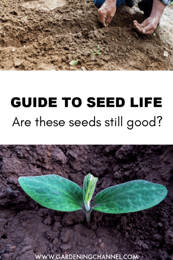 planting seeds and pumpkin seedling sprouting with text overlay guide to seed life are these seeds still good