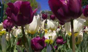 Looking for garden inspiration? Visit a botanical garden!