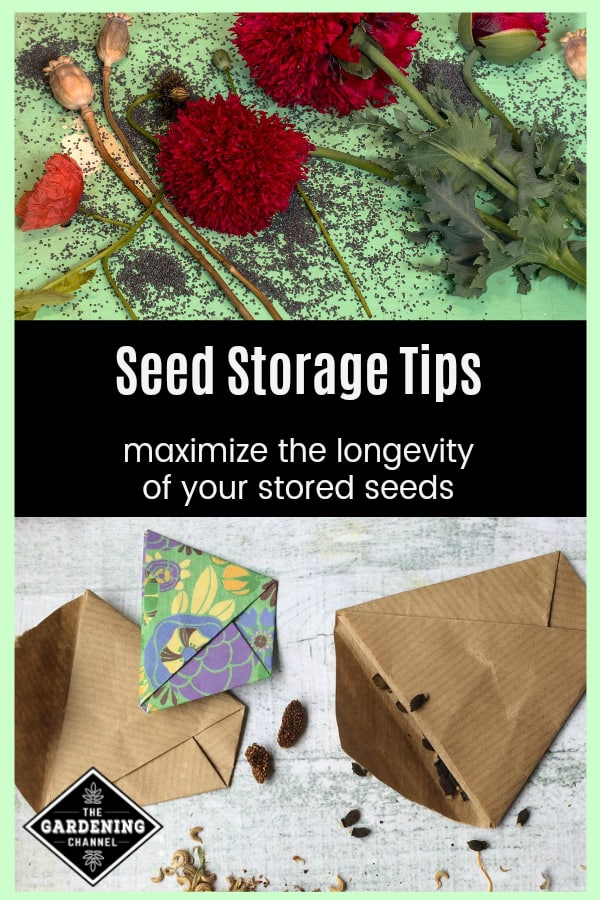 harvested poppy seeds and seed storage envelopes with text overlay seed storage tips maximize the longevity of your stored seeds