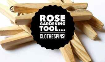 Household tools for Rose Gardening