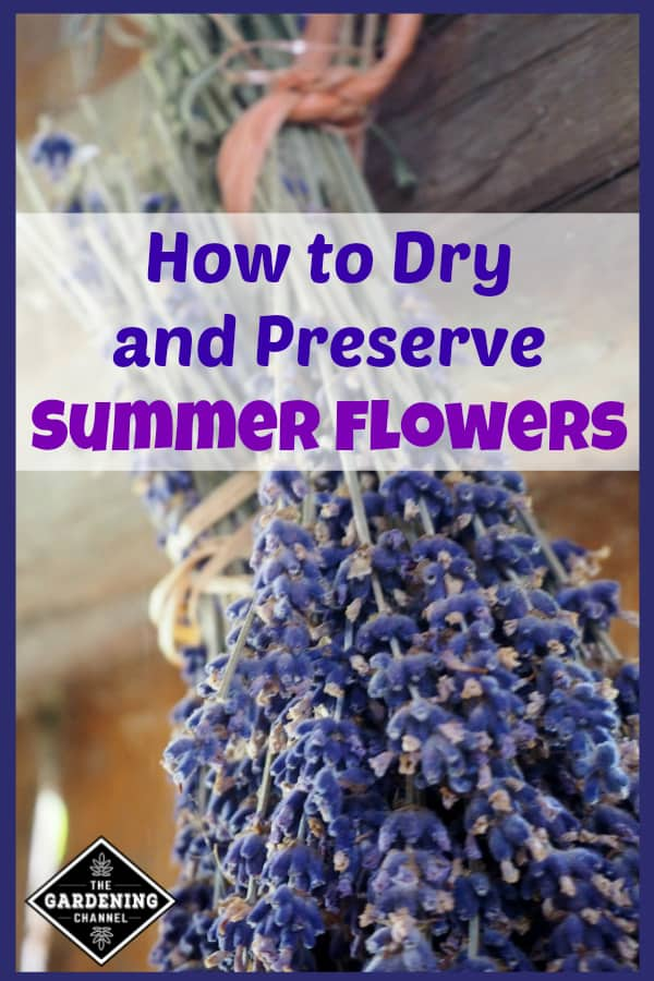 lavender hanging to air dry with text overlay how to dry and preserve summer flowers