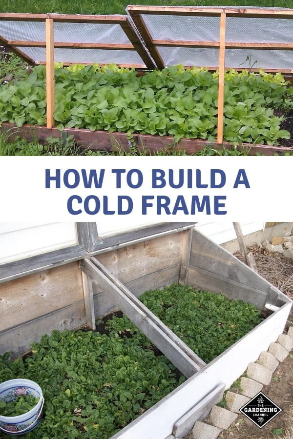 cold frame in yard and cold frame growing spinach with text overlay how to build a cold frame