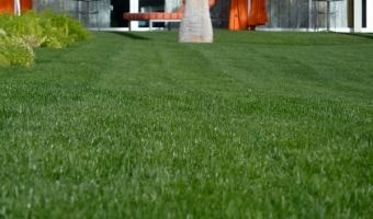 A well manicured lawn