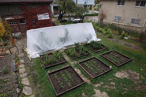 tomatoes head start