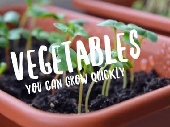 vegetables that grow fast