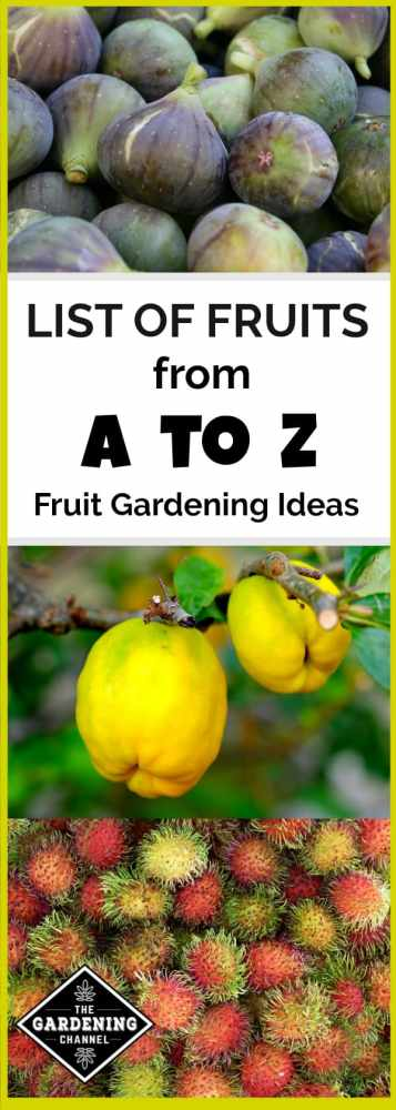 Need some ideas on fruits to grow in your backyard garden? Use this fruit growing list as a source of inspiration for growing fruits in your backyard!