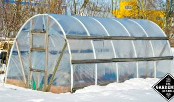 head start tomatoes in winter