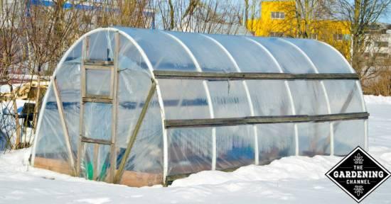 head start tomatoes in winter